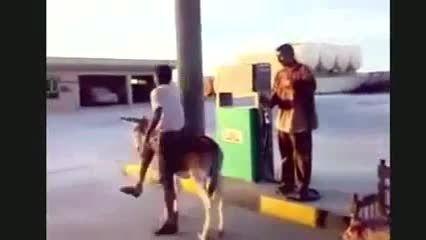 یک خر بسسیار عجیب درایران که با بنزین کار میکند