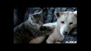 ماساژ سگ توسط گربه
