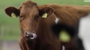 خوردن گوشت چقدر به محیط زیست آسیب می زند؟