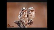 حیوانات دوقلو با شباهتی بی نظیر + تصاویر