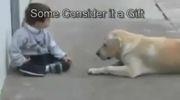 محبت بین سگ و پسر بچه - دانلود کلیپ جدید