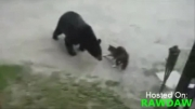 دفاع گربه از مادر و فرزند در مقابل خرس گریزلی!!!
