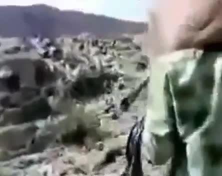عجیب ترین شیوه قاچاق شتر به عربستان!