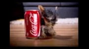 کوچکترین سگ جهان