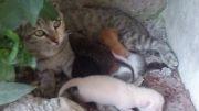 بچه پیشی های ناز ملوس خونمون با مامان گربه هه :)
