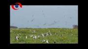 تصاویری تکان دهنده از نابودی پرندگان