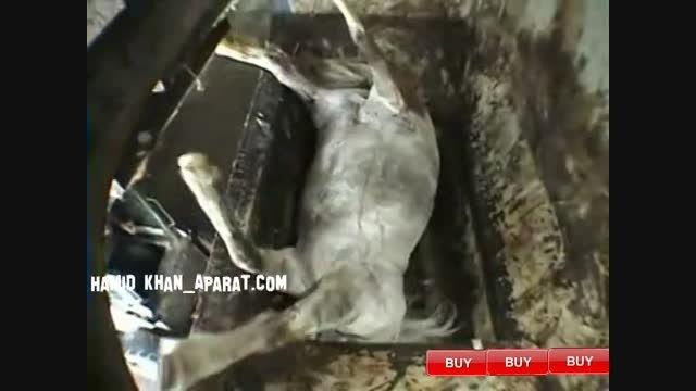 انداختن اسب سفید در چرخ گوشت عظیم الجثه(15+)