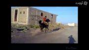 اسب تکرو کره تکرو رفسنجان درسن 2 سال و 7 ماهگی