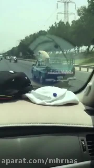 گوسفند فرار میکنه از عید قربان