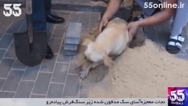 نجات معجزه آسای سگ مدفون شده زیر سنگ فرش پیاده رو