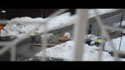نبرد خفن سگها در خیابان