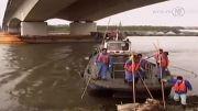 لاشه ی 2800 خوک آلوده به ویروس خوکی در رودخانه ی شانگهای