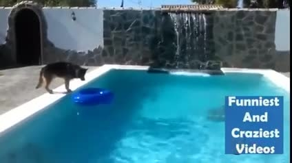 سگ غریق نجات