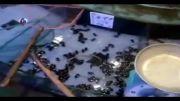 منوی موجودات زنده در یک رستوران چینی