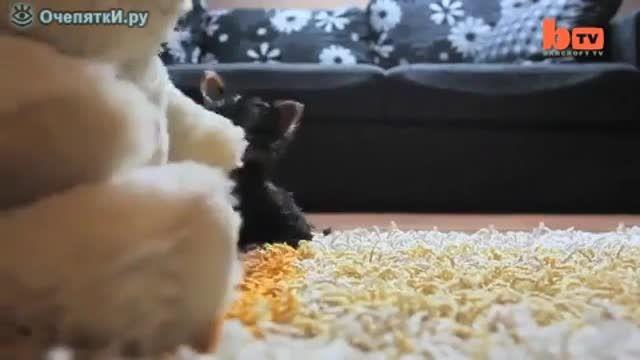 کوچک ترین سگ جهان