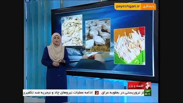 کاهش قیمت گوشت گرم مرغ