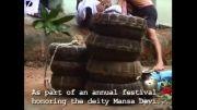 مرد هندی که میگذارد مار های کبرا تا 3 روز دائما او را بگزند!