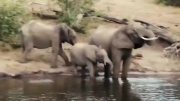 نبرد تمساح با فیل