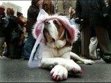 لباسهایی برای سگها