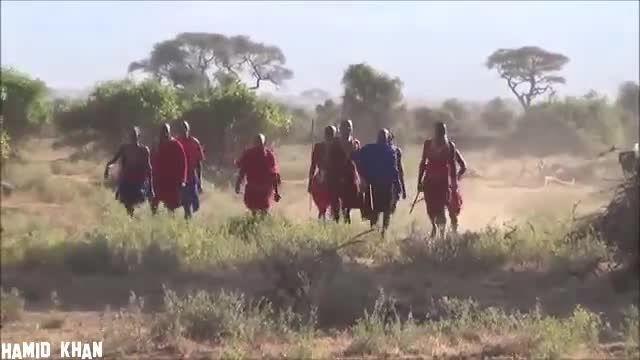 دزدیدن شکار شیر نر توسط قبایل سیاه پوست آفریقایی