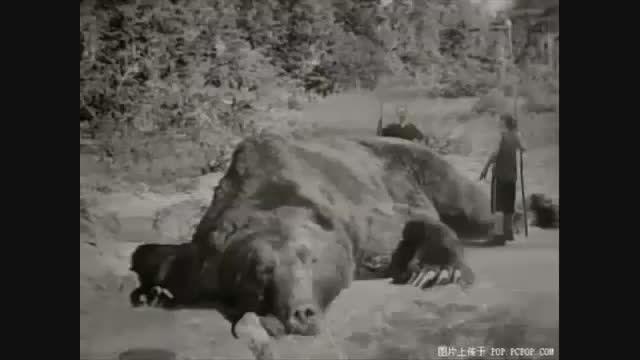 تصویر گرفته شده از بزرگ ترین خرس جهان