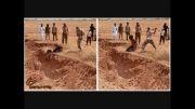 جنایت دیگری از داعش