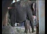 نمایش بچه فیل تازه متولد شده