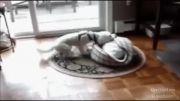 بچه ها و حیوانات .. یک ویدیو بی نظیر از محبت و دوستی