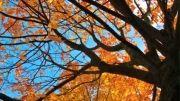 زندگی با درختان
