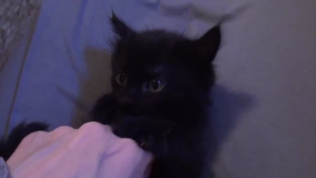 10 دلیل برای داشتن گربه سیاه در خانه..! HD