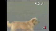 به خلقت و حقوق حیوانات احترام بگذاریم(بدون شرح)