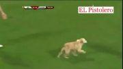 وارد شدن دو سگ به زمین فوتبال ، وسط بازی گالاتاسرای
