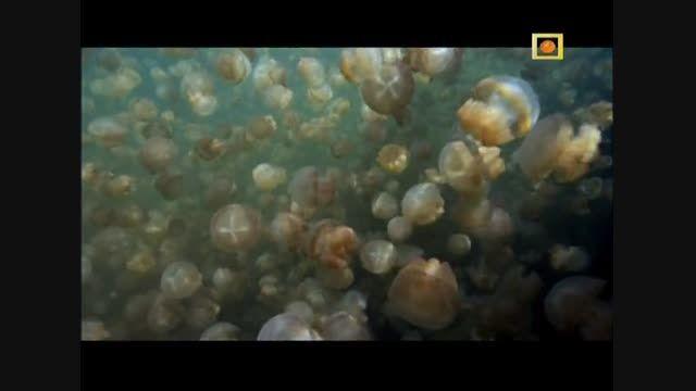مستند اقیانوس آرام جنوبی با دوبله فارسی - قسمت ششم