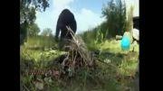 آشپزی یک میمون در جنگل!