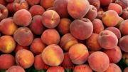 آموزش زبان عربی (آموزش مکالمه عربی) میوه ها