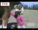 پرت شدن دختربچه توسط اسب