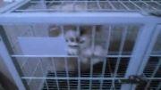 کلینیک حیوانات خانگی پرشین