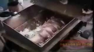 طریقه تولید سوسیس کالباس از گوشت خوک