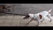 نشان دادن راه خانه ب سبک گربه !!!