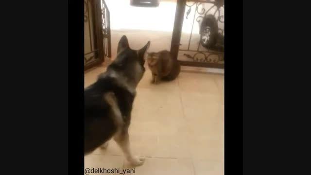سگی که از گربه می ترسد
