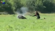 شکار گراز در وضعیت بحرانی