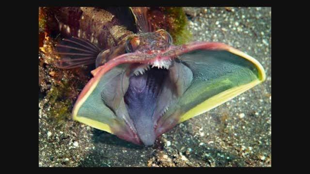 ترسناکترین ماهی جهان ...!