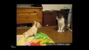 گربه دشمن بدجنس سگها