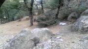 جنگل گلستان - آبشار