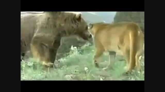 مجموعه نبرد های جذاب و دیدنی بین حیوانات