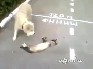 گربه ی زبل که سگ رو حسابی فیلم کرده
