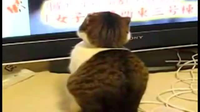 ترس گربه (3) !!!