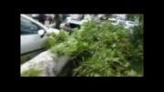 سقوط درخت 125 ساله در طوفان تهران