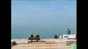 پرندگان درسواحل بوشهر