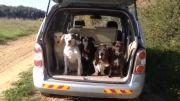 عکس العمل سگها هنگام گفتن اسمشان توسط صاحبش